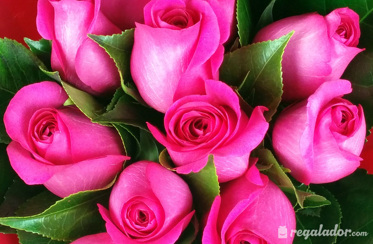 Ramo De Rosas Rosas En Regaladorcom