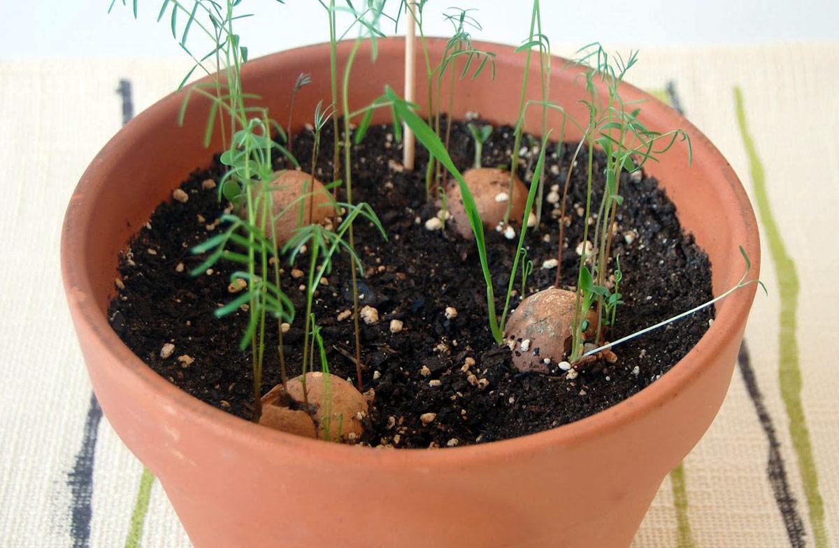 Greenbomba plantas arom ticas que germinan solas en for Asociacion de plantas aromaticas