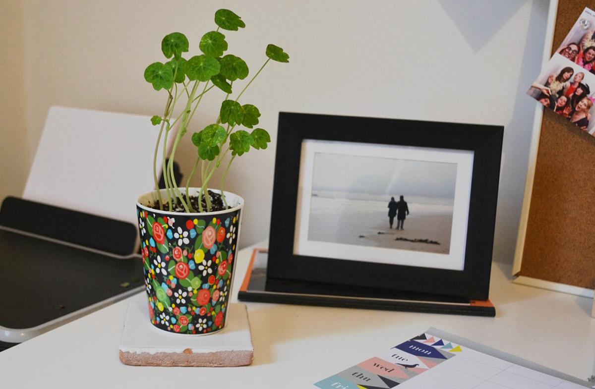 Macetas decorativas para plantar en casa en - Macetas para colgar ...