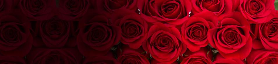 Regalos San Valentín 2015