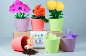 Kit para cultivar plantas de colores y decorar tu hogar