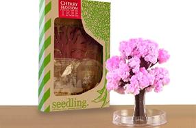Kit Seedling 'Mi cerezo en flor mágico'