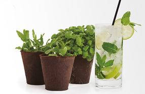 Kit de cultivo para preparar los mejores cocktails
