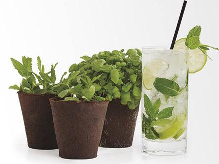 cocktail-plantas-aromaticas