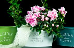 Jardinera de flores vintage