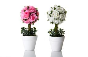 Juego de arbolitos de rosas con maceta cerámica