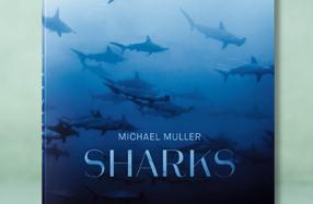 'Sharks': el libro para saber todo sobre tiburones