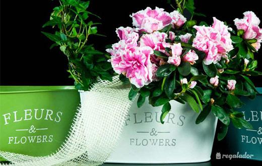 jardinera-flores