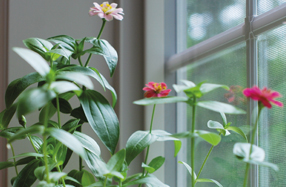 Kits de cultivo con flores de interior