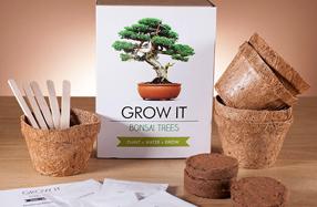 Kit para plantar tu propio Bonsai