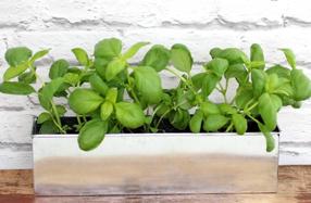 Mini huerta aromática Foodie garden