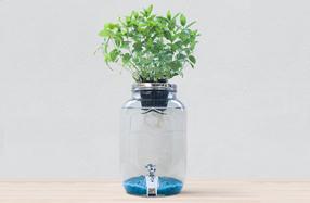 Blue Jar: Cultiva plantas hidropónicas y decora