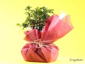 regalos para médicos y enfermeros