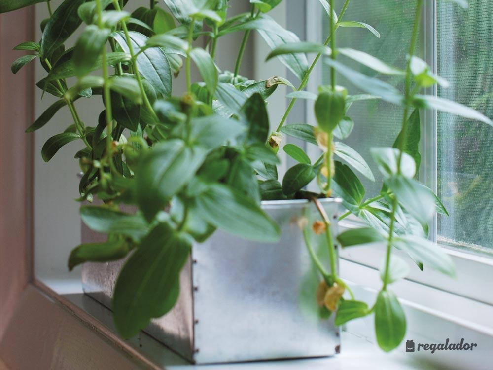 Kits de cultivo con flores de interior en for Cultivo en interior