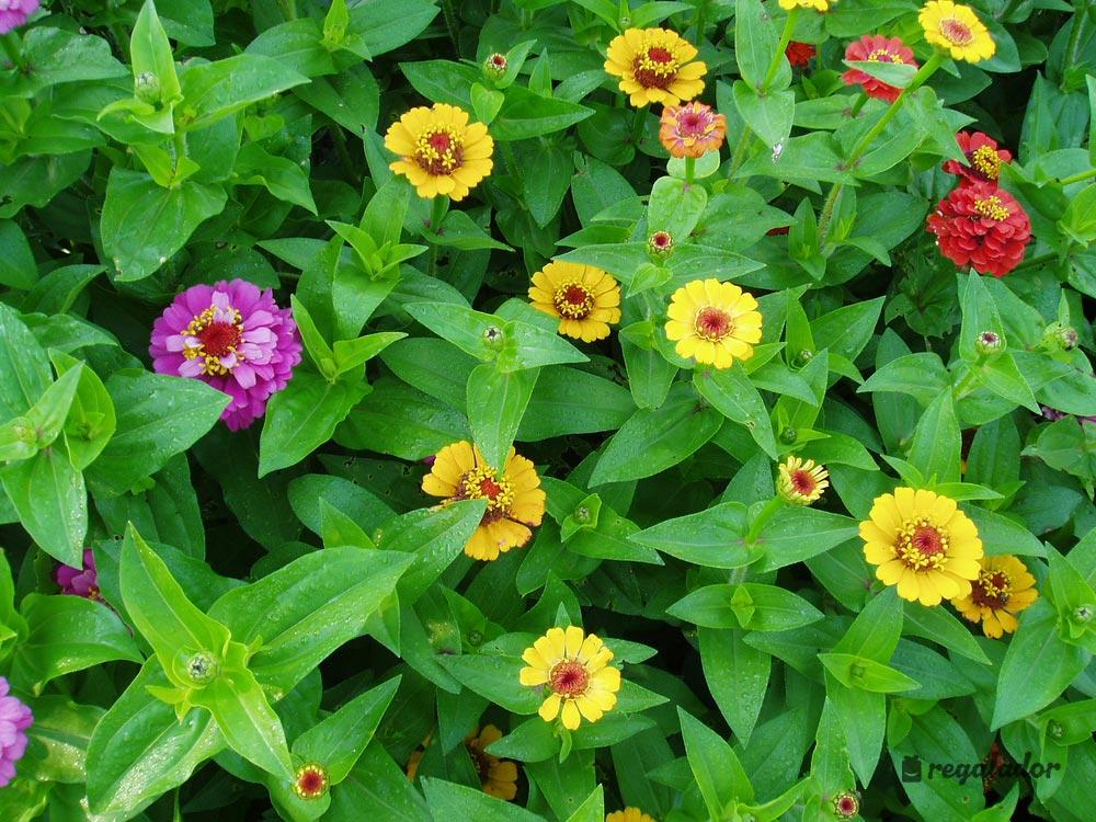Kits De Cultivo Con Flores De Interior En Regaladorcom - Flores-interior