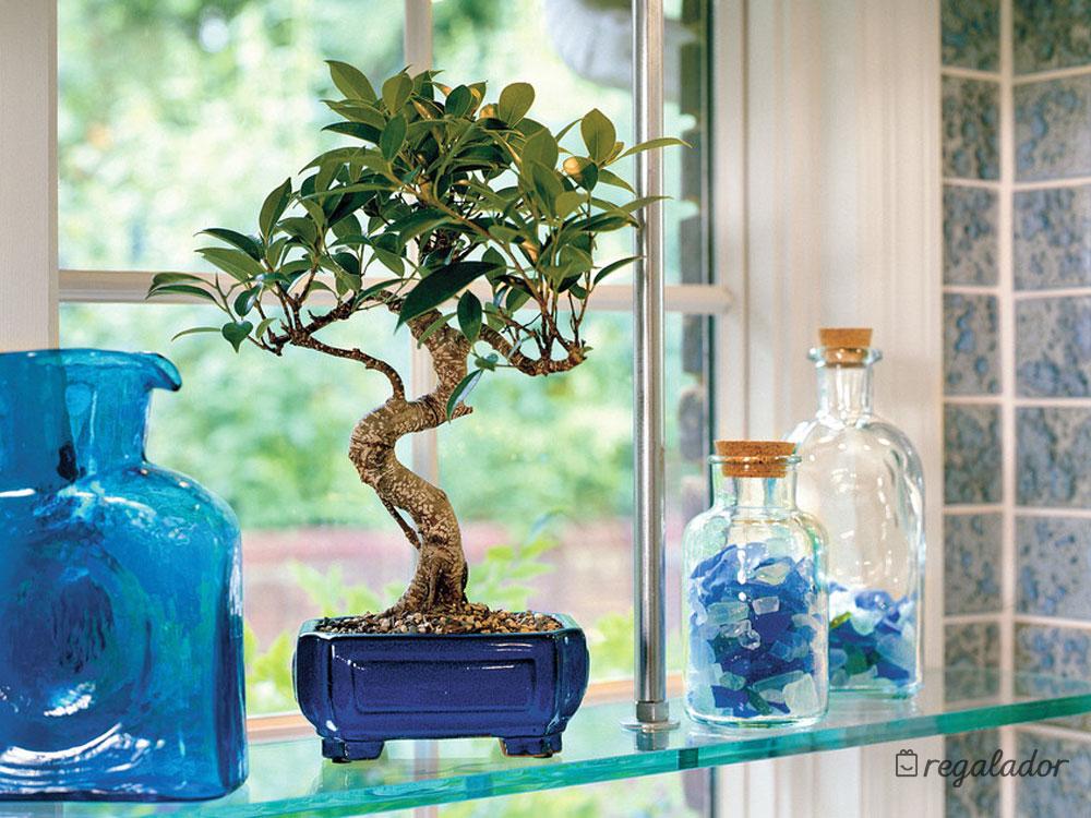Plantas decorativas naturales en Regalador.com