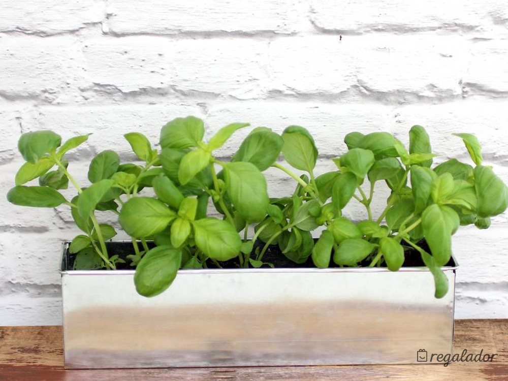 "Mini huerta aromática ""Foodie garden"""