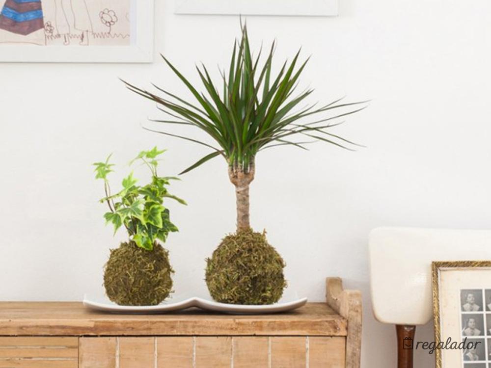Kokedama: la planta que no necesita maceta